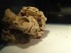 Fossile2